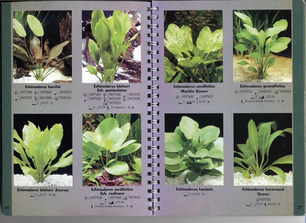 горох символизирует виды аквариумных растений с фото и названиями которые