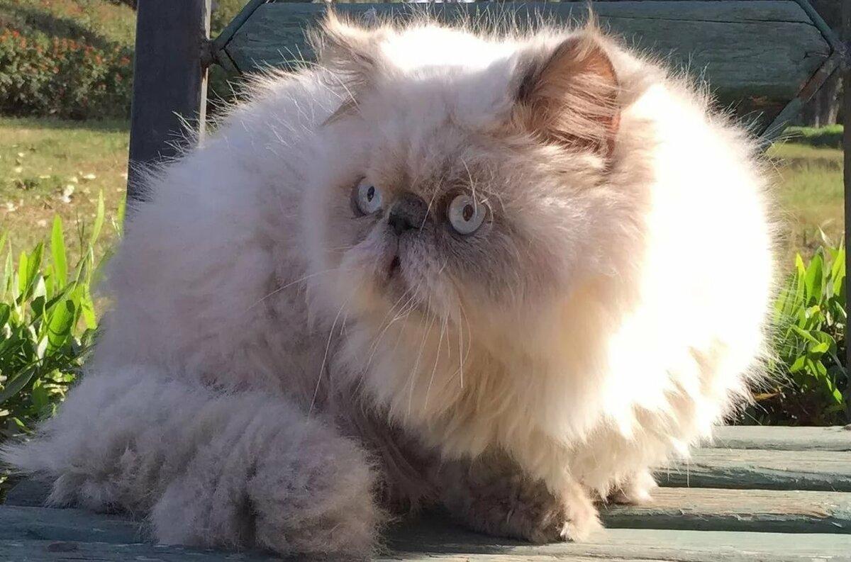 коты экстремалы фото тактаров нашел