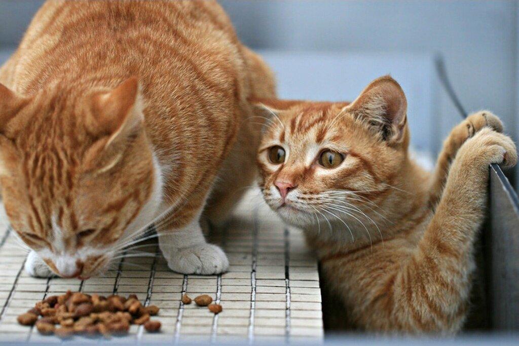 День рождения, корм для котов прикольные картинки