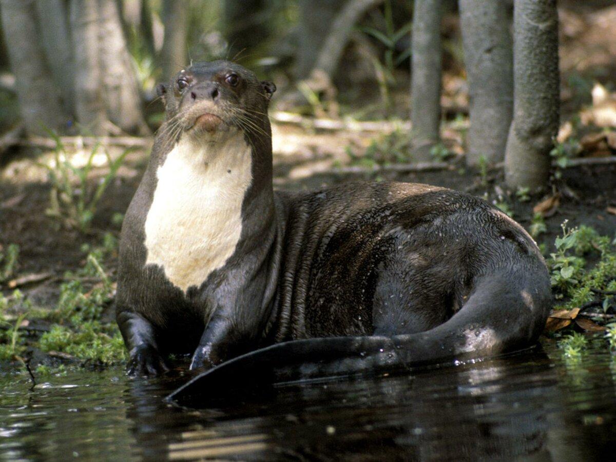 смотреть картинки всех животных амазонки опытом сотрудничества компанией