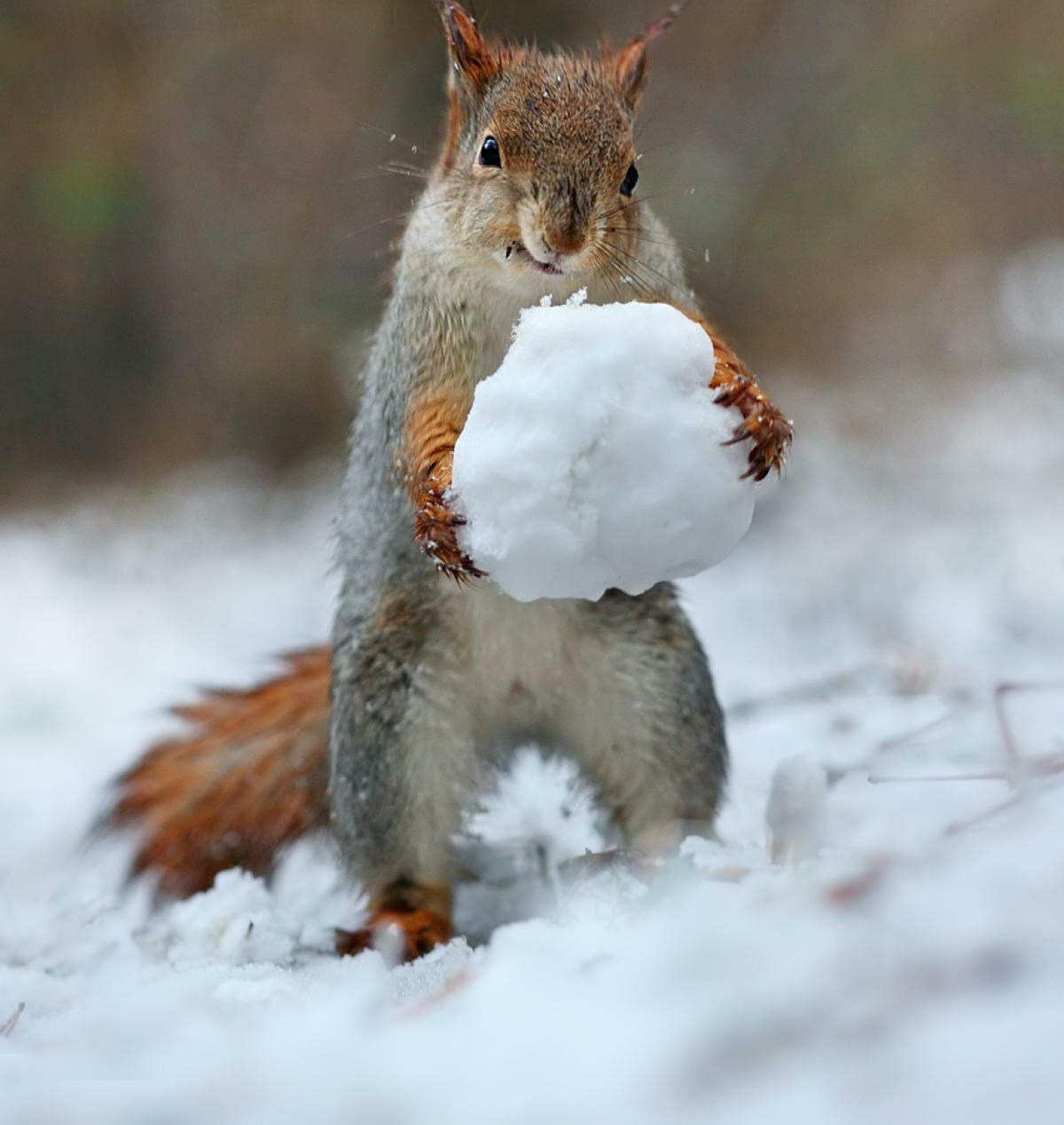 Веселой зимы картинки