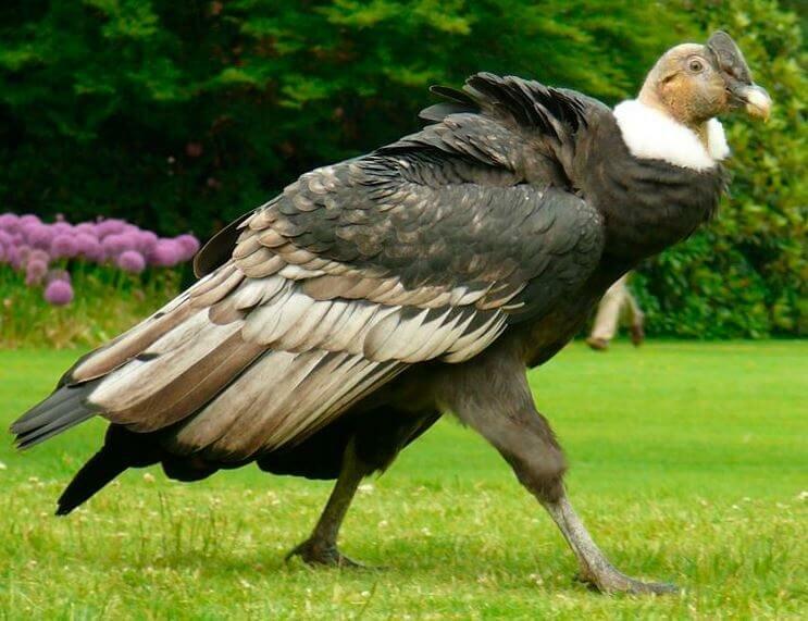 картинки самых больших птиц в мире декора