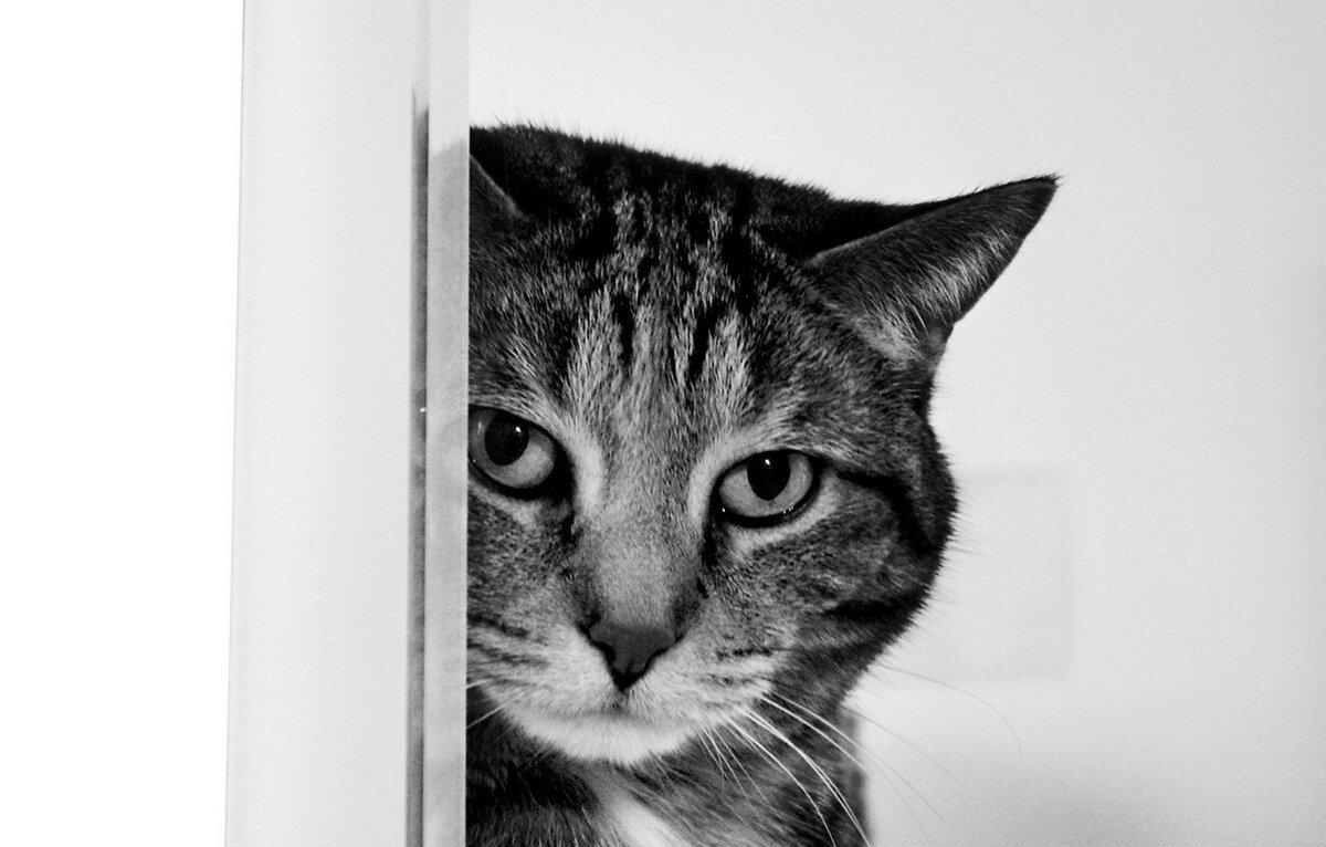 Черные картинки с белыми смешные, добрым утром приятным