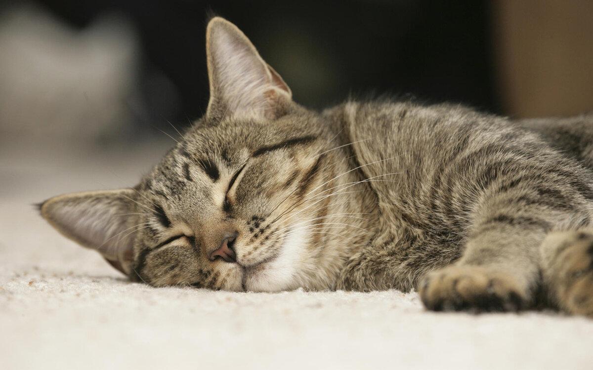 Шуточные открытка, спокойной ночи котики картинки
