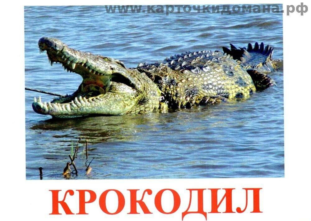 херст английский в картинках крокодил конструкция корпуса