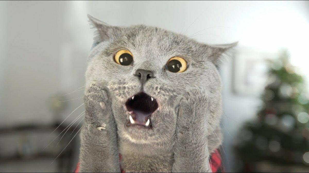 Прикол кошка картинки, открытки днем