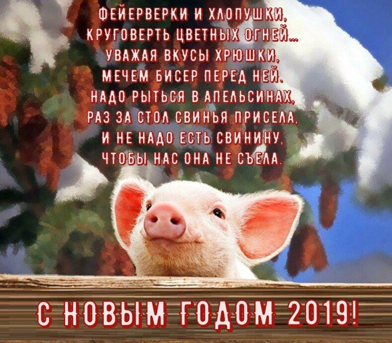 Картинки про уходящий год свиньи