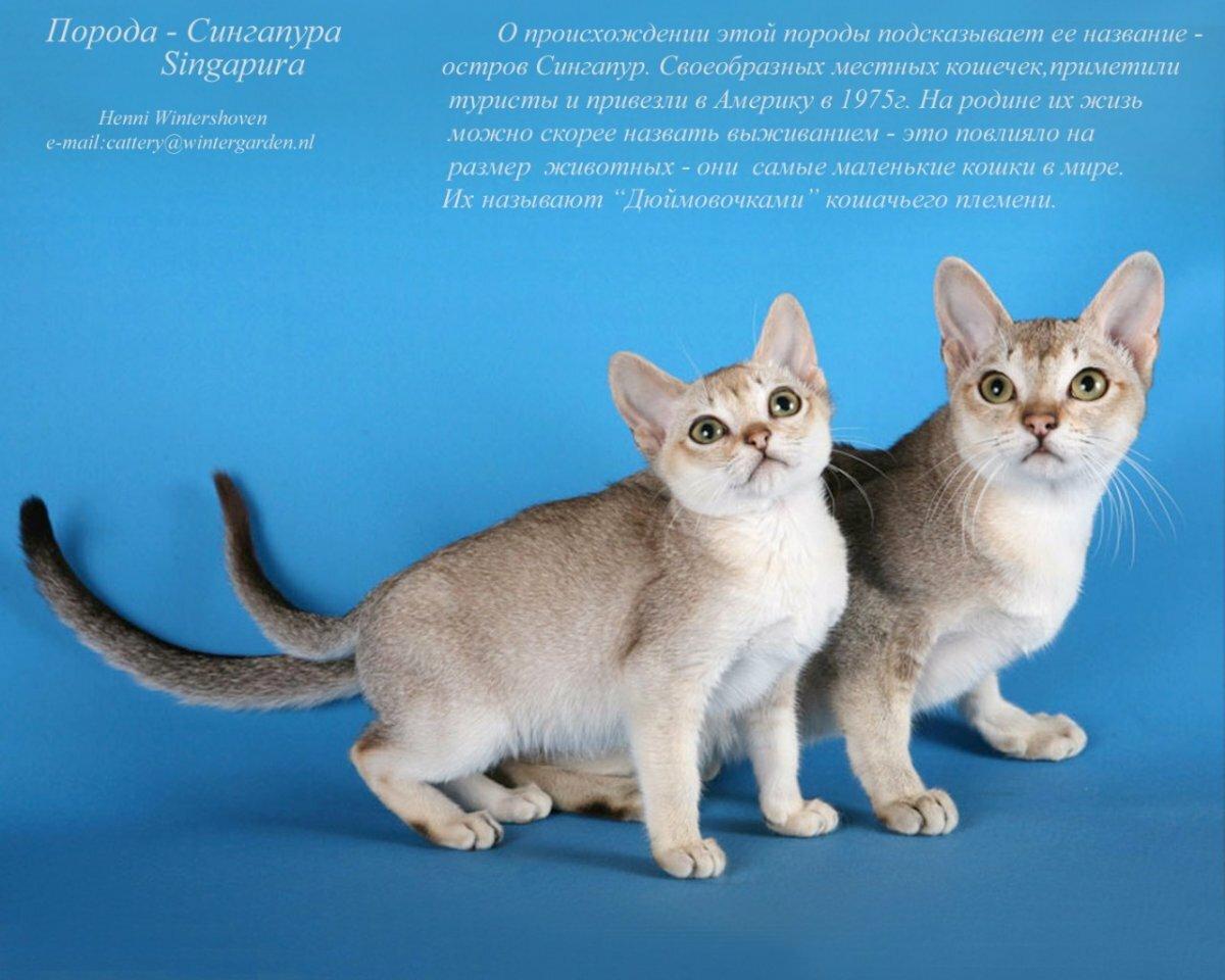 Днем, картинки пород кошек с надписями