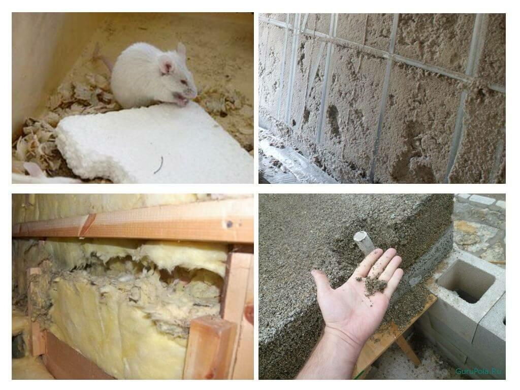 мыши живут в стекловате
