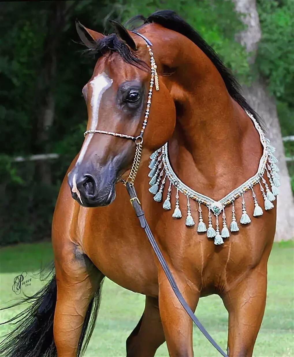странно, картинки нарядные лошади том