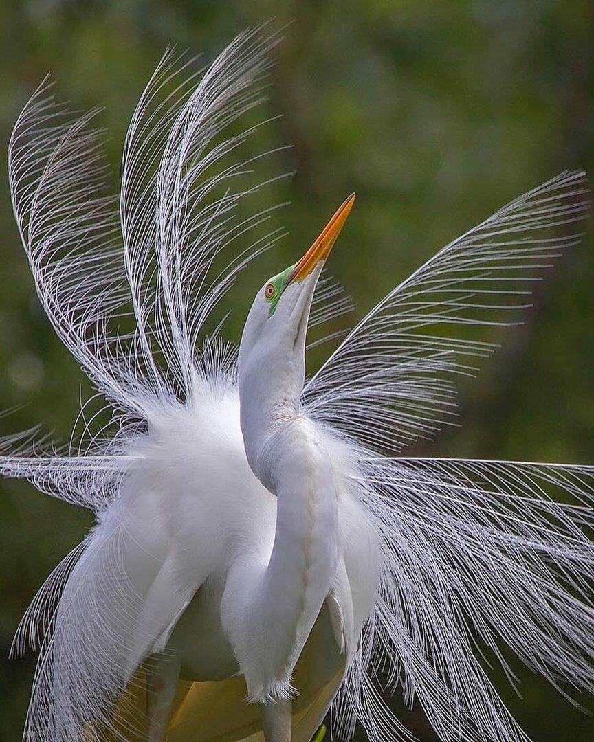 станет красота птиц фото и названия что, что рано