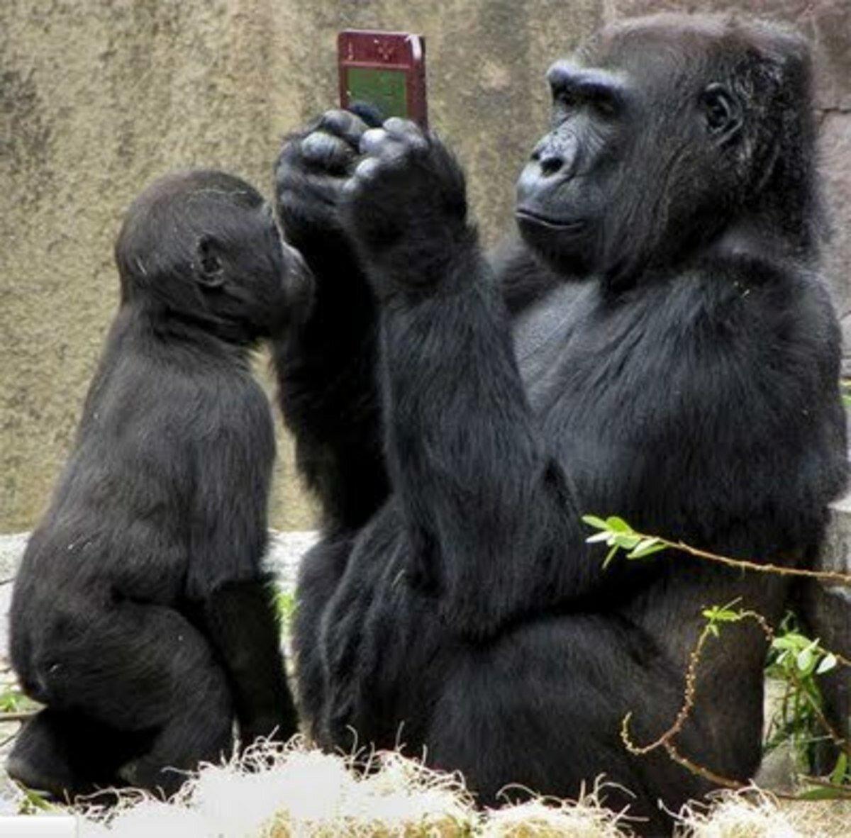Картинки с животными приколы с животными, открытки поздравлениями дню
