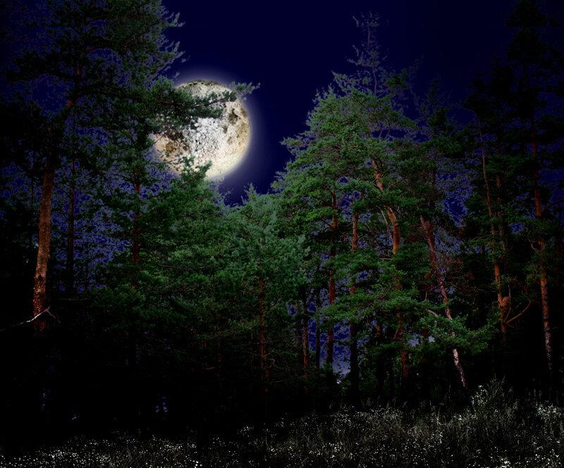 Рисунки удачного, картинки лунная ночь в лесу
