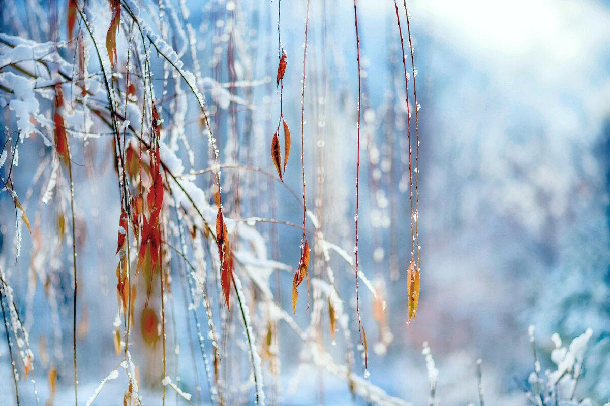 Зимние картинки с детьми рассказывает