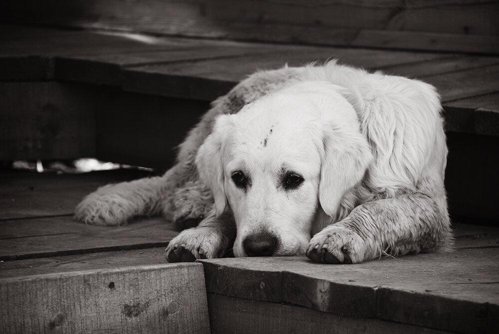 Картинка с грустящим животным