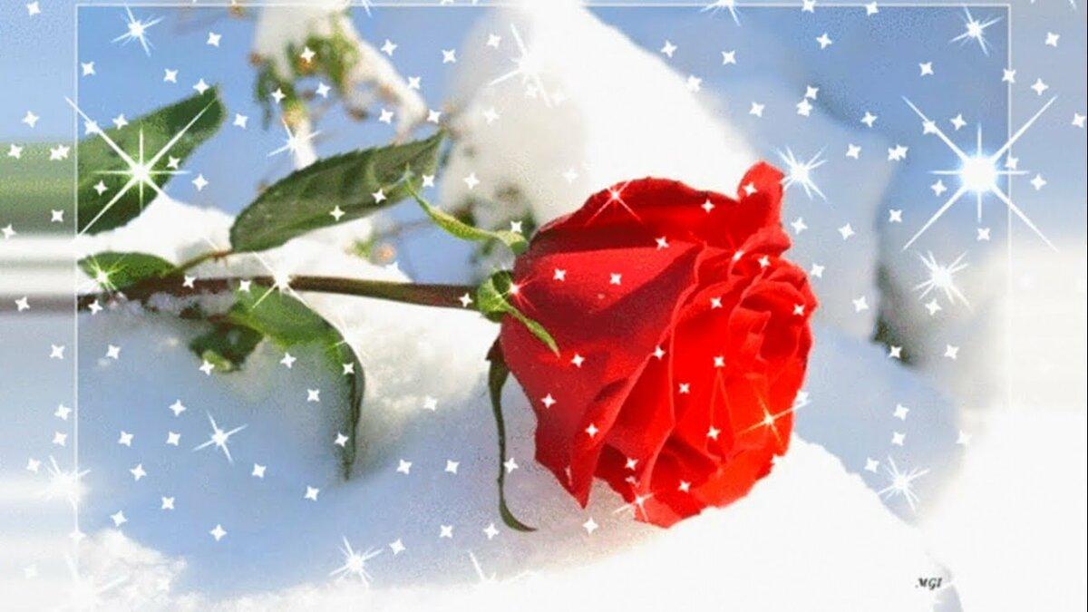 Для, розы на снегу открытки