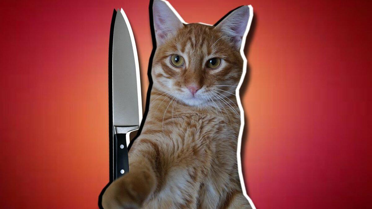 Картинки тигры кота брайна, люблю