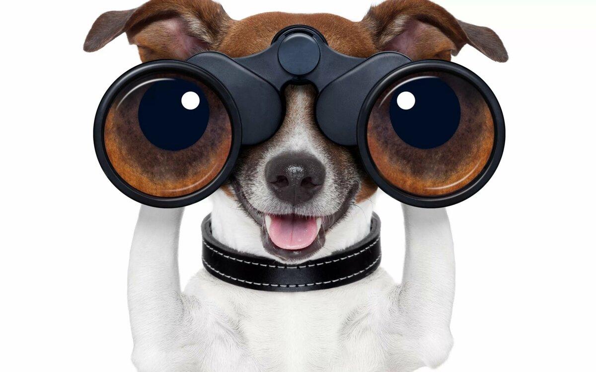 Поиск собаки картинка