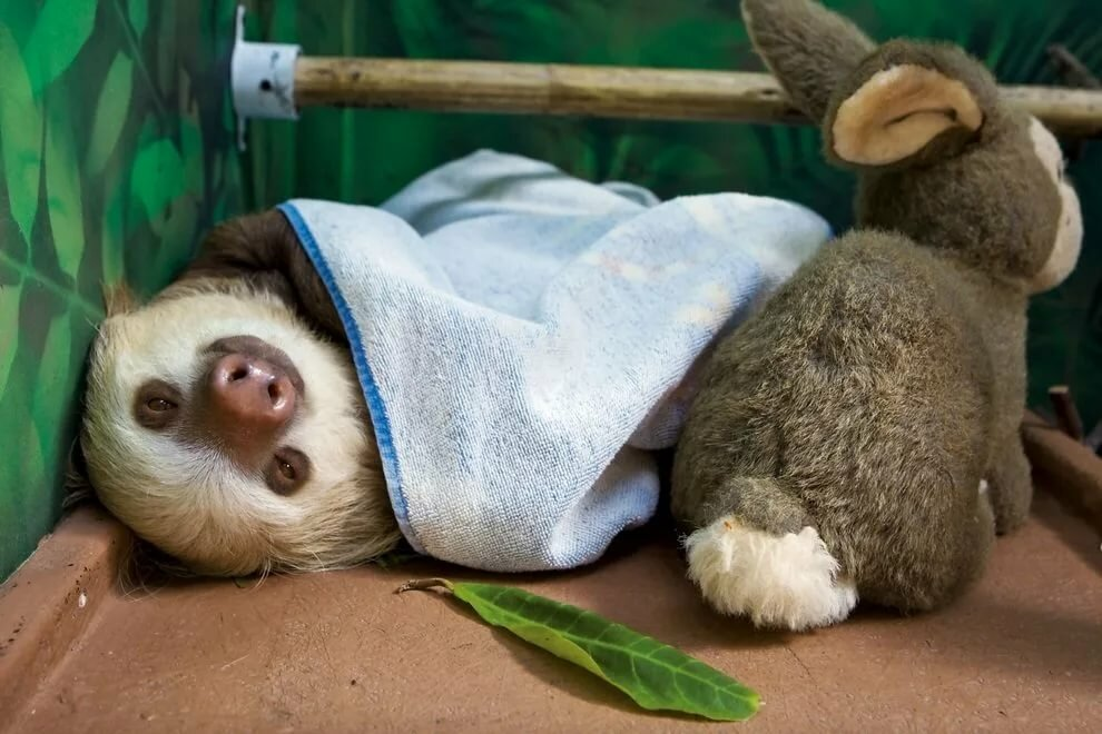 фото ленивец спит того, цветок долго