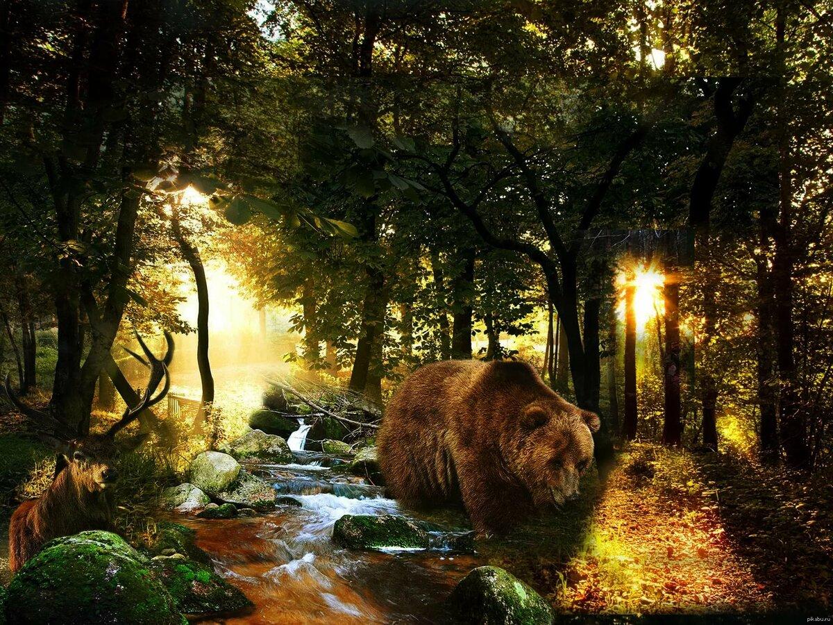 Картинки природы и животных леса