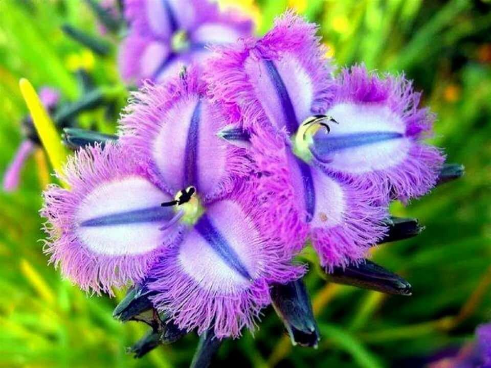 Фото цветы интересные