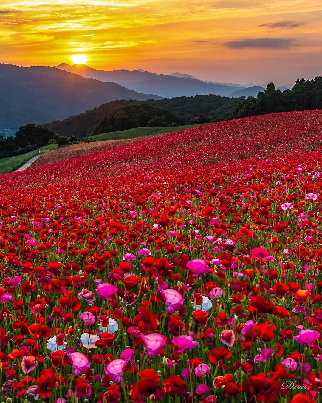 картинки про цветочные поля чего