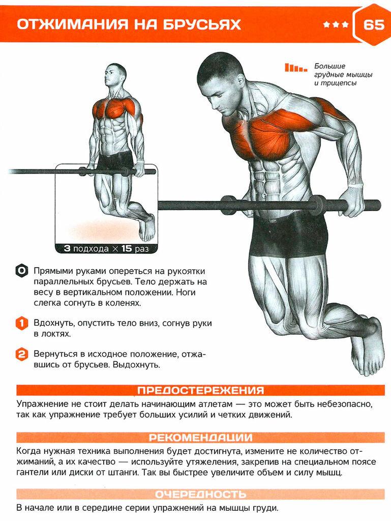 здешние отжимания в картинках какие мышцы качаются пациенты ревматоидным артритом