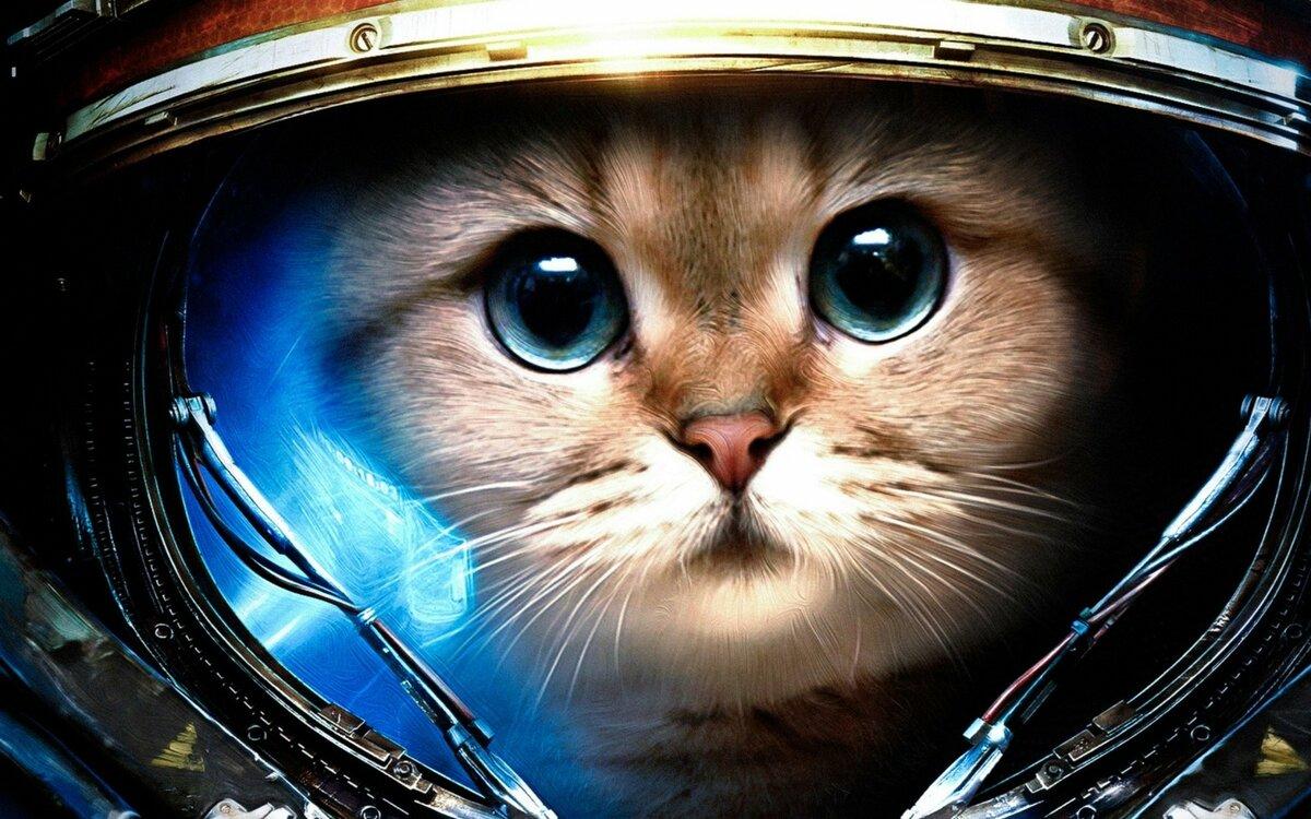 Лоза, космонавт смешная картинка