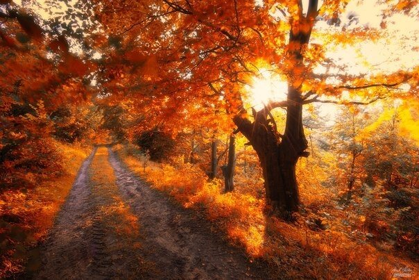 "Магия осеннего леса в Ñ""оÑ'ограÑ""Ð¸ÑÑ Ð¯Ð½ÐµÐºÐ° Седлара - Путешествуем вместе"