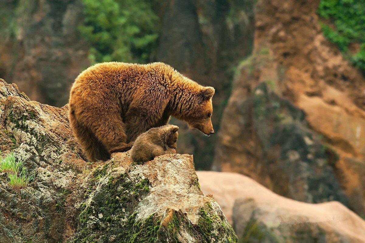картинки большие животные и маленькие