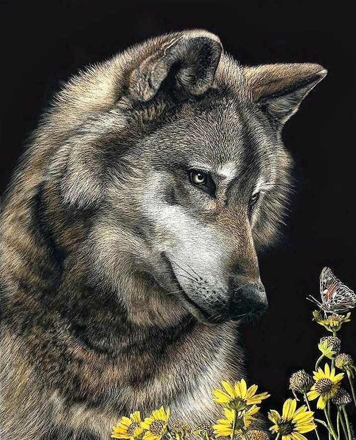 Красивая открытка волка