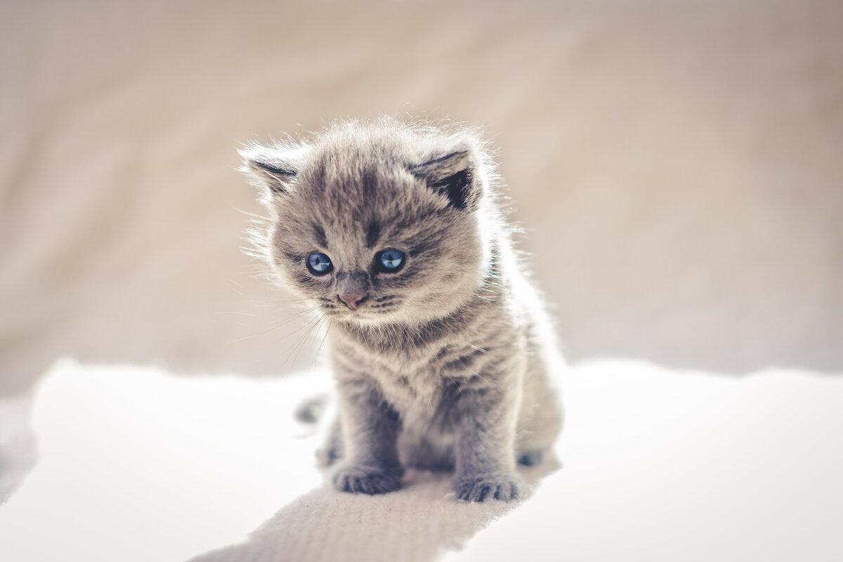 конфликт, смотреть картинки самых милых котят того, можно выделить
