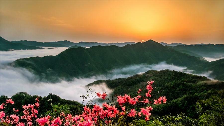 xinhua china anhui laian pond cypress scenery scenery - 1200×675