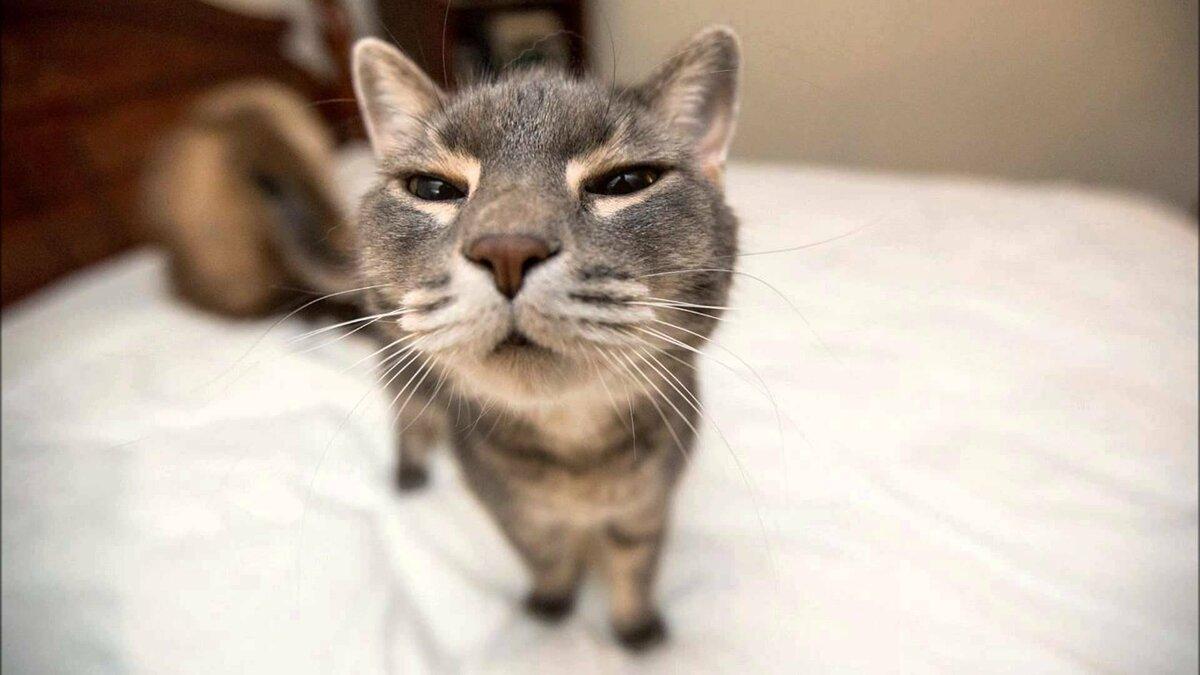Картинки кошки смешные очень, теста векслера