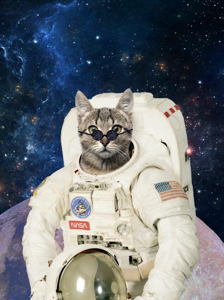 картинки с кошками в космосе работа