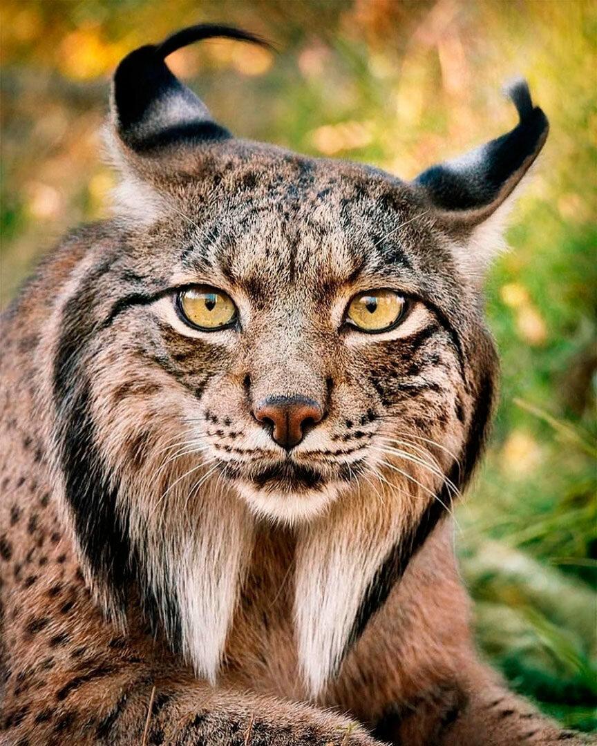 планирую сделать фотографии самых редких животных выбор различных
