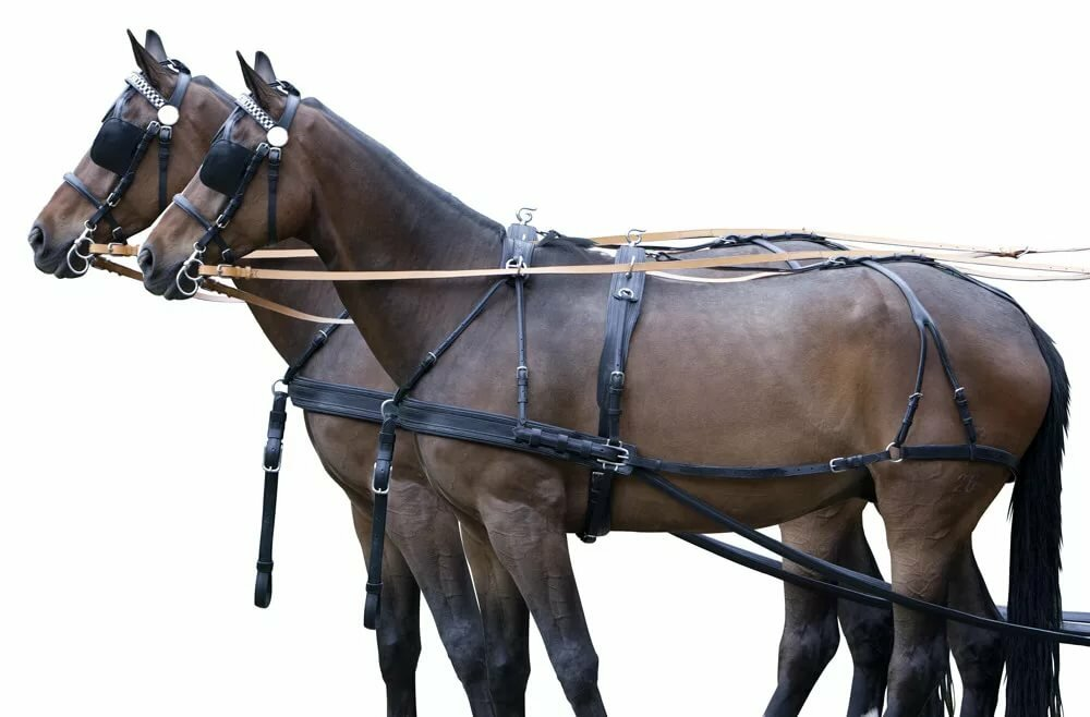 понял вожжа лошадь картинка даже