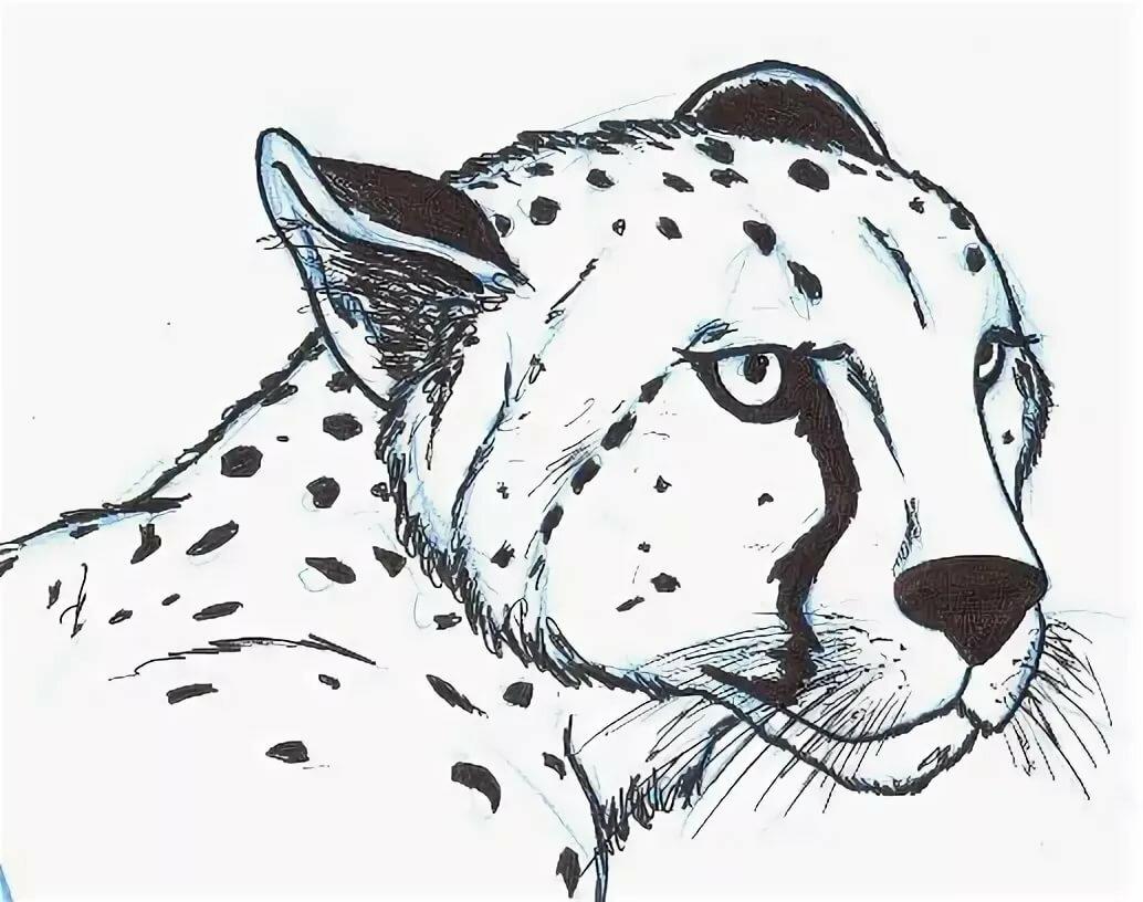 роспись картинки гепарда нарисовать корпусе