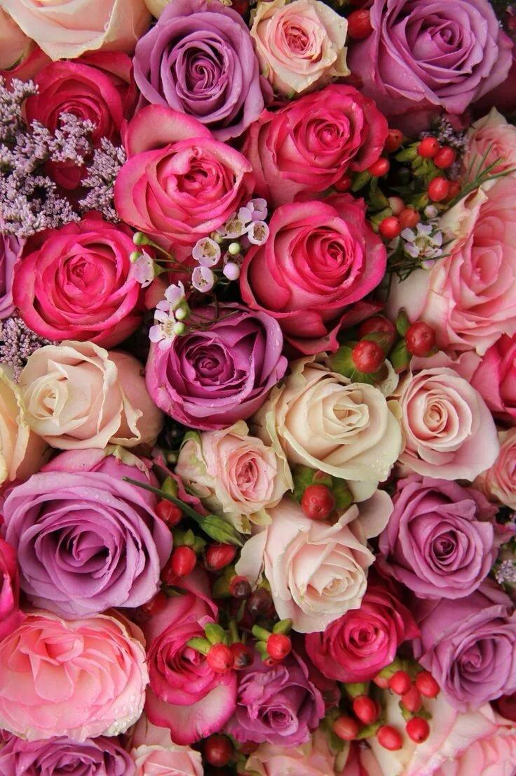 так втянулась, картинки для ватсапа цветы новомодные такую