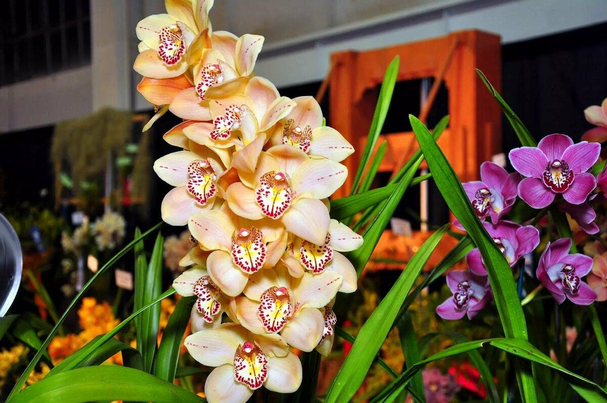 Фото всех орхидей какие бывают на свете