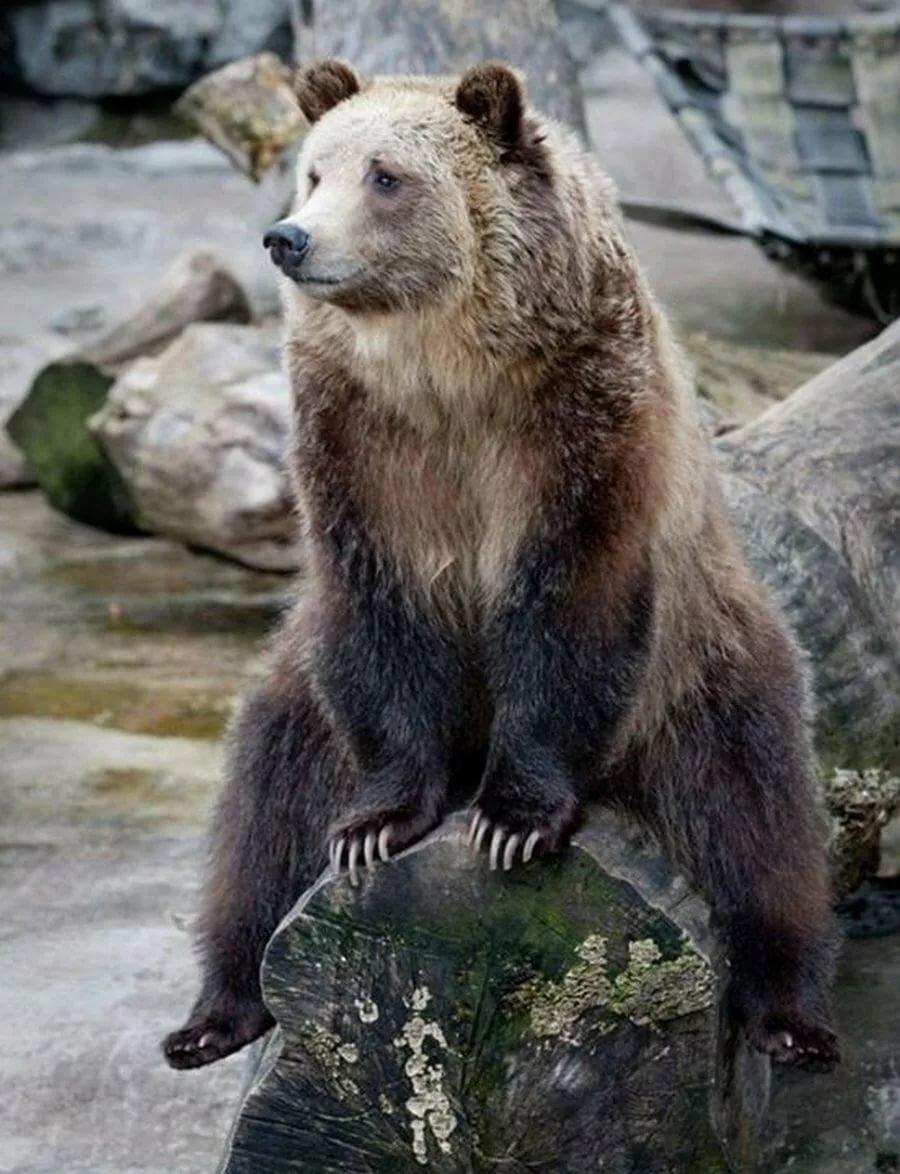 адреса смешные фото с медведями модельные стрижки часто