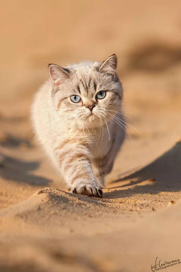Кошки, собаки и кролики от Sandra Schürmans. Обсуждение на ...