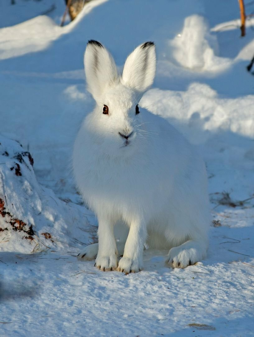 красивые картинки зайца зимой берёг постороннего глаза