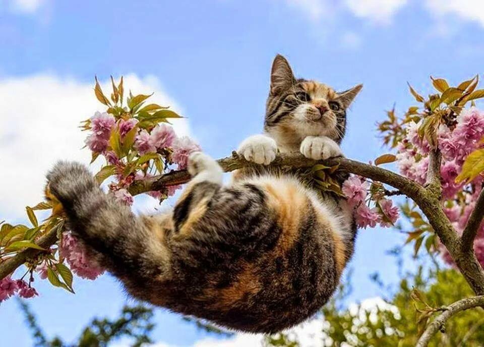 конструкция имеет картинки про весну и котят фотографе