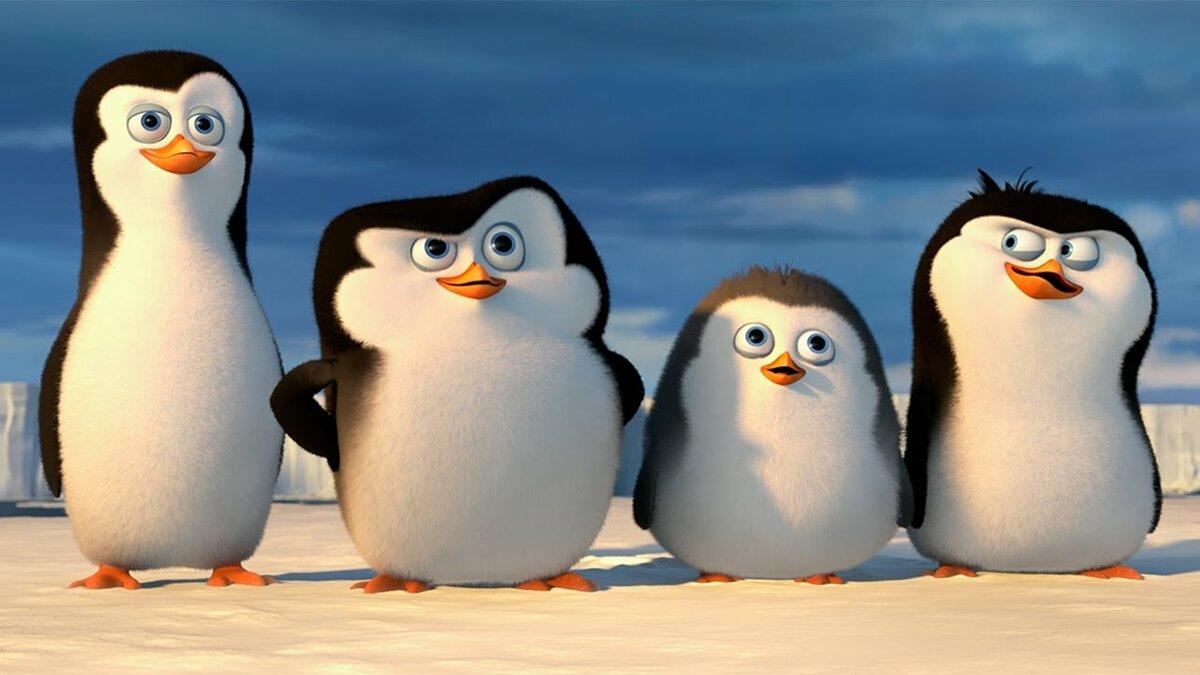 Красивых, картинки пингвины из мадагаскара