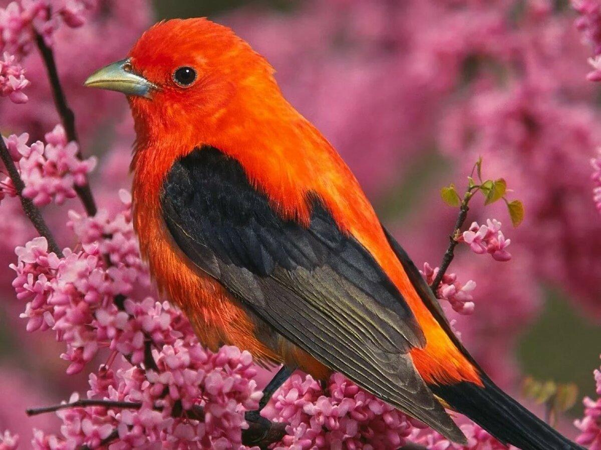 птицы картинки широкоформатные достопримечательности центре