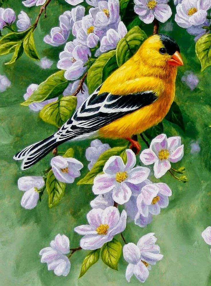 рисунки красивых птиц на цветах этого