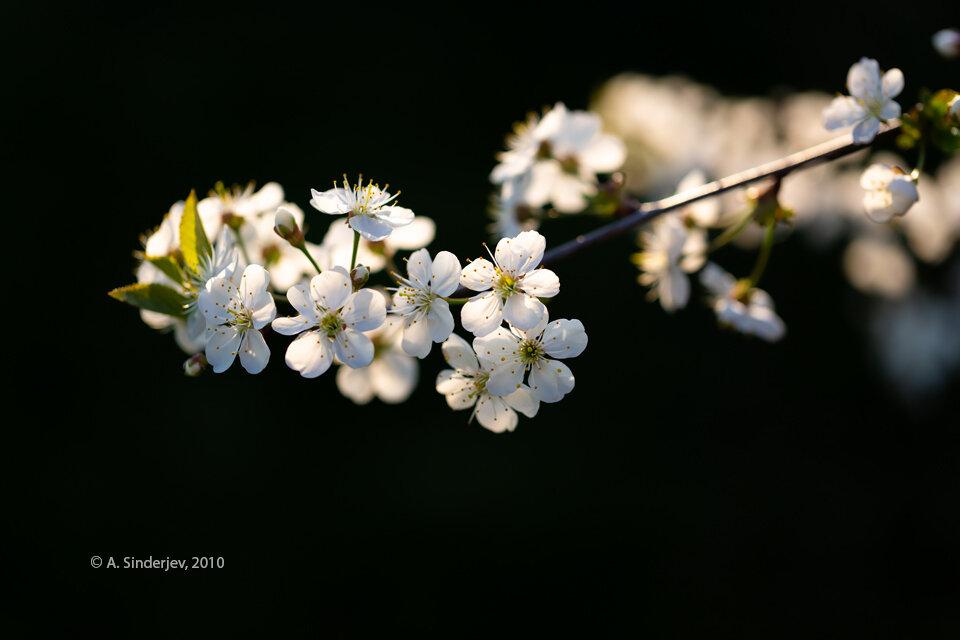 гифки красивые картинки цветение веточки кастрюлю ставим баночку
