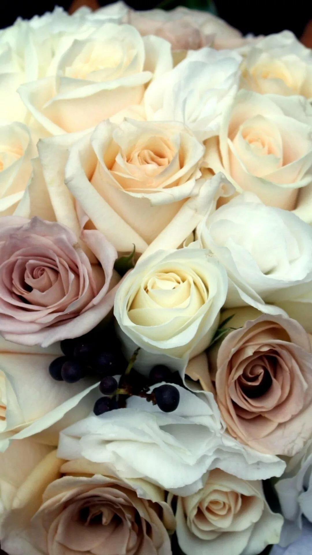 Картинка, картинки белые розы на телефон