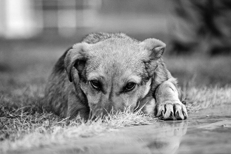 Животными юмор, картинки с собаками грустные с надписями